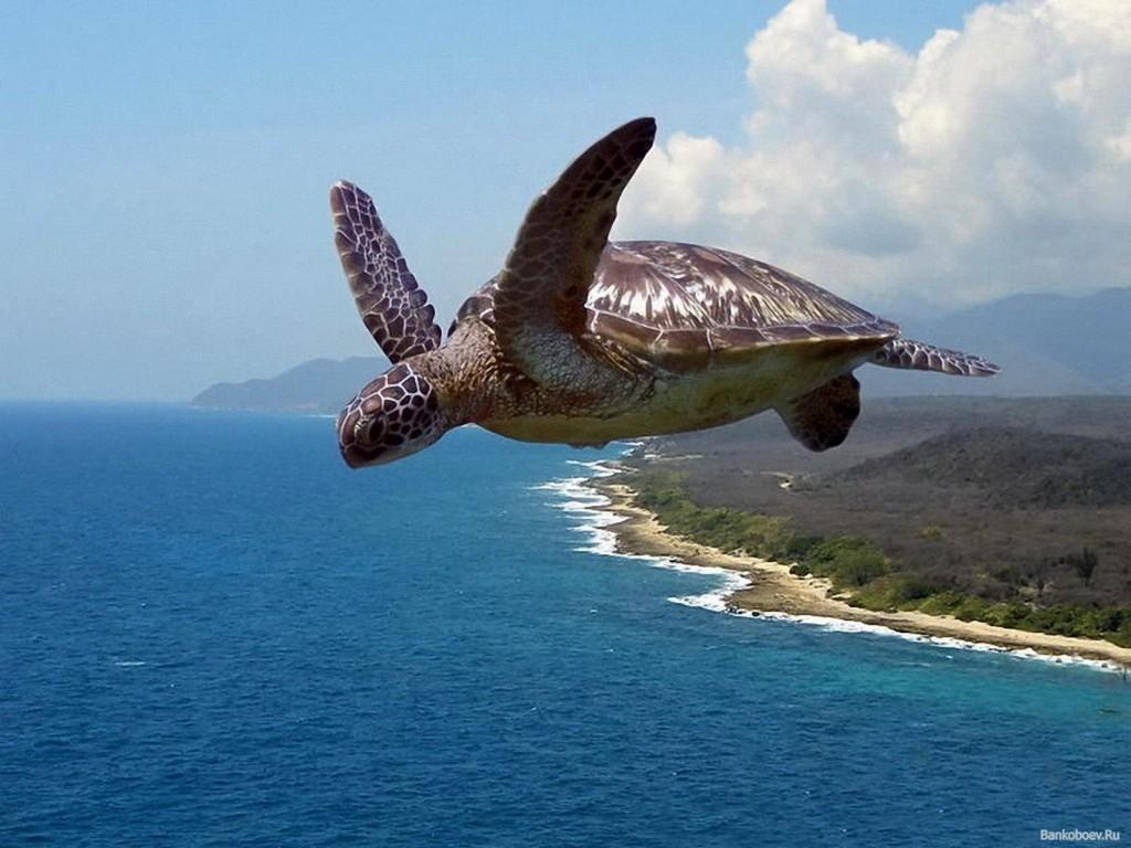 літаюча черепаха