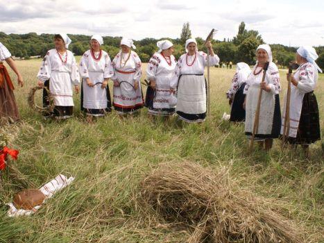 Толока в українському селі