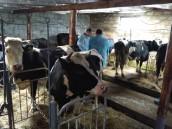 На Рівненщині відкрили першу в області сімейну молочну ферму