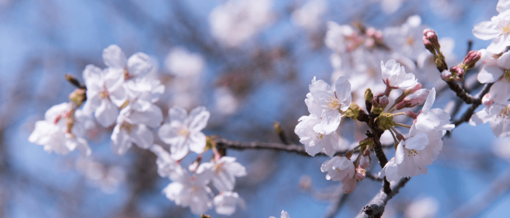 blooming-blossom-blur-1045615