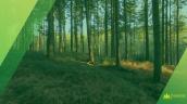 експорт лісу-кругляку