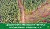 ліс, Го лііс, незаконні вирубки