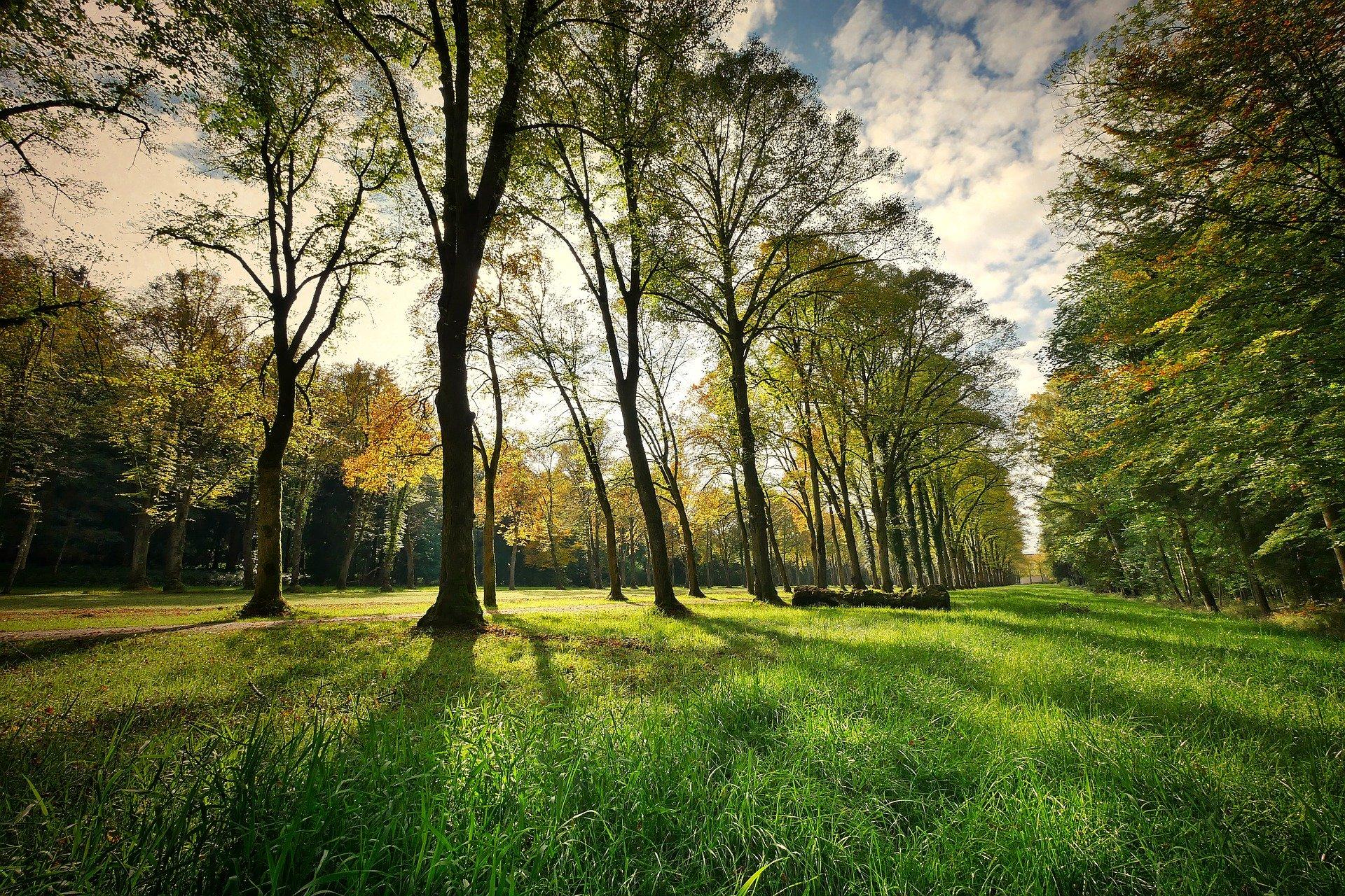trees-3076834_1920